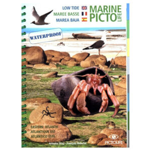 Marine Pictolife: Low Tide